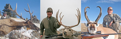 Montana Private Land Elk, Mule Deer and Antelope Combo Hunts